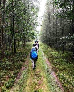 jutro v gozdu