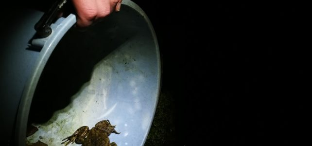 Pomagajmo žabicam čez cesto